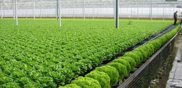 Ứng dụng nổi bật của đèn led trong nông nghiệp